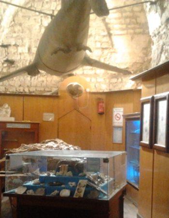 متحف الاحياء المائية بالاسكندرية 2