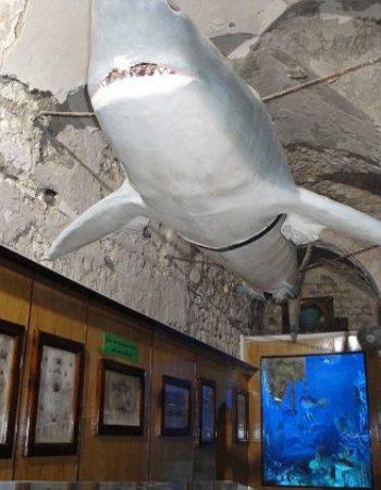 متحف الاحياء المائية بالاسكندرية 3