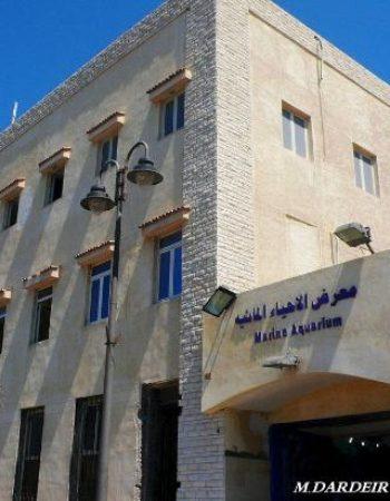 متحف الاحياء المائية بالاسكندرية 4