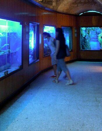 متحف الاحياء المائية بالاسكندرية 6
