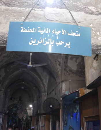 متحف الاحياء المائية المحنطة بالاسكندرية