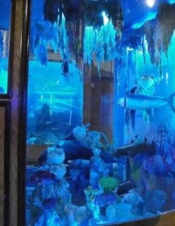 متحف الاحياء المائية بالاسكندرية 5